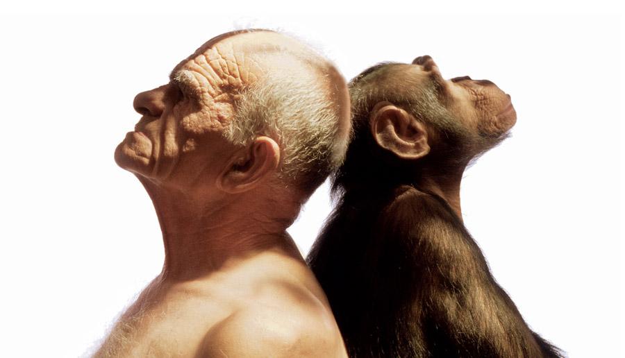 Scimmia Nuda